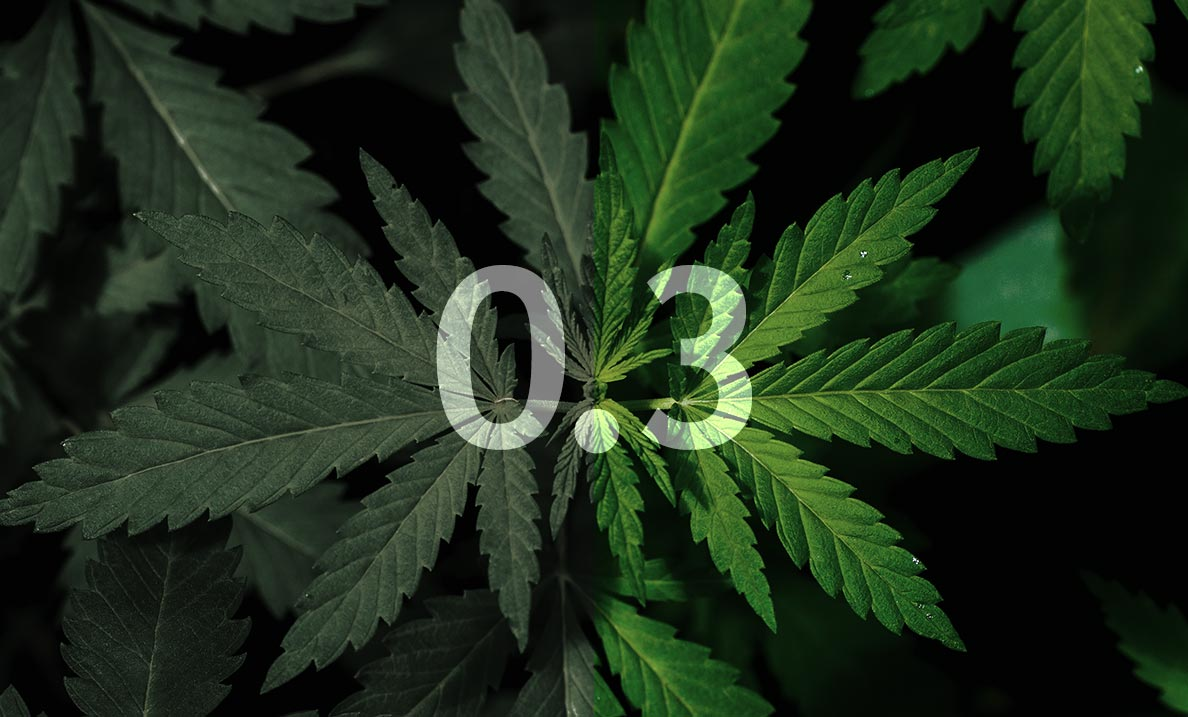 Federal Cannabis, Hemp, and CBD Testing Lab