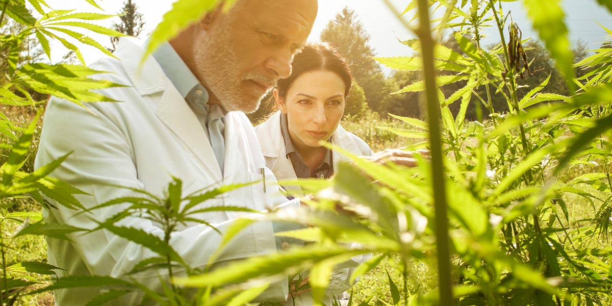 Testing Best Practices for Hemp Growers